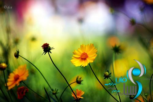 تصاویربسیار جالب گل
