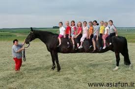 اسب عجیب