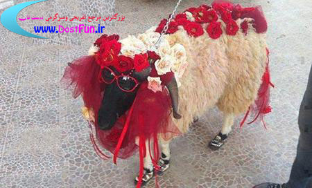 عکسی از یک عروس خوشکل ایرانی
