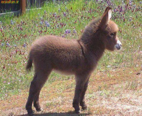 خوشکلترین خر دنیا