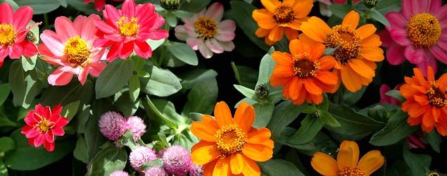 گل های زیبا وخوشرنگ