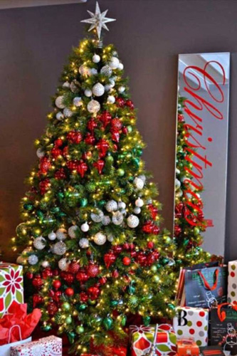 درخت کریسمس, نهال صنوبر
