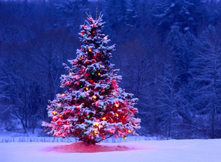 افسانه به وجود آمدن درخت کریسمس