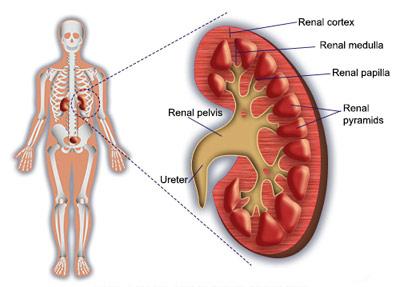 بیماری گلومرولونفریت (التهاب مویرگهای کلیه)