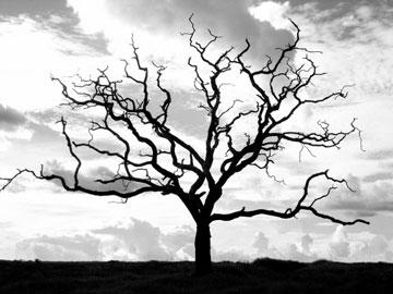داستان دعای پیامبر برای درخت خشکیده
